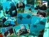 foto_collage_gaaikema_voorbeeld_3